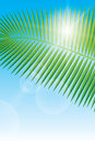 Sunlight and palm leaf Stock Photos