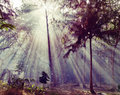 Sunlight rays pour through leaves in a rainforest in thailand hdr Stock Image