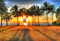 Sunlight rising behind palm trees in HDR, Port Douglas,Australia Royalty Free Stock Photo