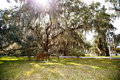 Sunlight through spanish moss over park shining in oak trees a and an empty bench Stock Image
