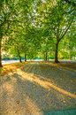 Sunlight and trees in hyde park autumn sunset london uk leaves footpath europe Royalty Free Stock Photos