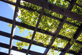 Sunlight through trellis frame and vine Royalty Free Stock Photo