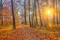 Sunlighted autumn forest colorful and foggy Royalty Free Stock Images