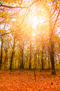 Sunlit autumn forrest image of a Stock Image