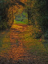 Sunlit Forest Path Royalty Free Stock Photo