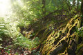 Sunlit forest, Poland Royalty Free Stock Photo