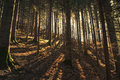 Sunlit forest Royalty Free Stock Photo
