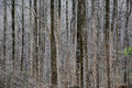 Sunlit Lacy Wintry Forest Royalty Free Stock Photo