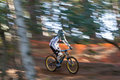 Sunlit mountain biker a male downhill goes down the hill amongst the trees Royalty Free Stock Photos