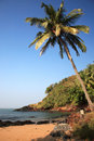 Sunlit palm tree over the beach Goa Stock Images