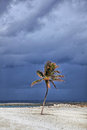 Sunlit palm tree with stormy clouds in the background paradise island bahamas Royalty Free Stock Photos
