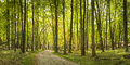 Sunlit path an early autumn panoramic view of a Royalty Free Stock Images