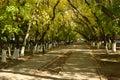Sunlit path in the park falltime Stock Photos