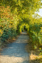 Sunlit path walking through vegetation Royalty Free Stock Photo