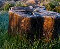 Sunlit rimy stump the first frost in the morning Stock Photos