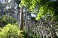 Sunlit trees Royalty Free Stock Photo