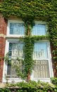 Sunlit window of old red brick building covered by green plant Royalty Free Stock Photo