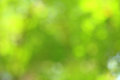 Sunny abstract green nature background selective focus Stock Image
