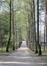 The sunny alley with high trees in the spring time riga Royalty Free Stock Images