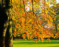 Sunny autumn foliage Stock Photography