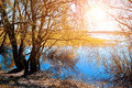 Sunny autumn landscape yellowed autumn willow under sunshine on the bank of the small river at autumn sunset rural with Royalty Free Stock Photography