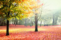 Sunny autumn park Royalty Free Stock Photography