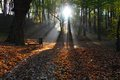 Sunny autumn sun rays in a park Royalty Free Stock Photos