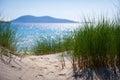 Sunny beach with sand dunes, tall grass and blue sky.
