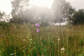 Sunny beautiful meadow of wildflowers in sun rays in summer moun Royalty Free Stock Photo