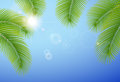 Sunny blue sky and palm branches. Royalty Free Stock Photography