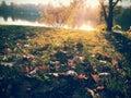 Sunny day autumn Stock Photography