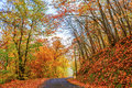 Sunny day in autumn road with trees on a Royalty Free Stock Image