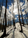 Sunny day in forest