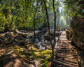 Sunny day at tropical rain forest landscape with wooden bridge a and river near kulen waterfall in cambodia Royalty Free Stock Photography