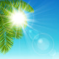 Sunny day vector illustration a with palm tree branches against the sky Stock Photography