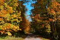 Beautiful and colorful autumn. An alley with fallen leafs Royalty Free Stock Photo