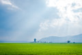 Sunny Field Royalty Free Stock Photo