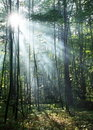 Sunny forest. Stock Photos