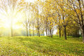 Sunny forest bright in autumn Royalty Free Stock Images