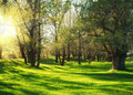 Sunny green forest shadow Stock Photography