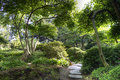 Sunny japanese garden in summer Royalty Free Stock Photo