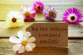 Sunny label with life quote be the reason someone smiles with cosmea blossoms brown yellow effect purple and white on wooden Royalty Free Stock Image