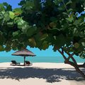 Sunny landscape with tropical tree with beach umbrella and sun loungers