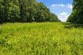 Sunny meadow Fotografía de archivo libre de regalías