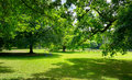 Sunny Meadow with green grass and large trees Royalty Free Stock Photo