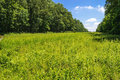 Sunny meadow a summer field in sourland mountain preserve in somerset county in new jersey Royalty Free Stock Photography