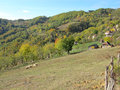 Sunny mountain landscape with sheep autumn of slopes and the small village on the hills Stock Photos