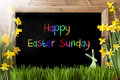 Sunny Narcissus, Bunny, Colorful Text Happy Easter Sunday