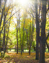 Sunny nature parks autumnal with sumbeams Royalty Free Stock Photography