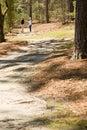 Sunny nature walk trail Royalty Free Stock Photo